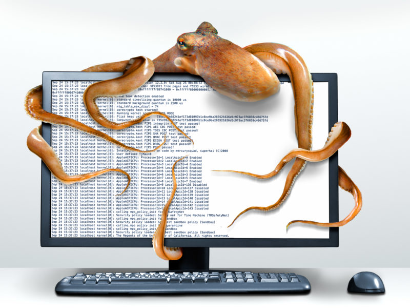 Photomontage with Photoshop: Icon image for data theft: The tentacles of a data stealing octopus wrap around a computer monitor.