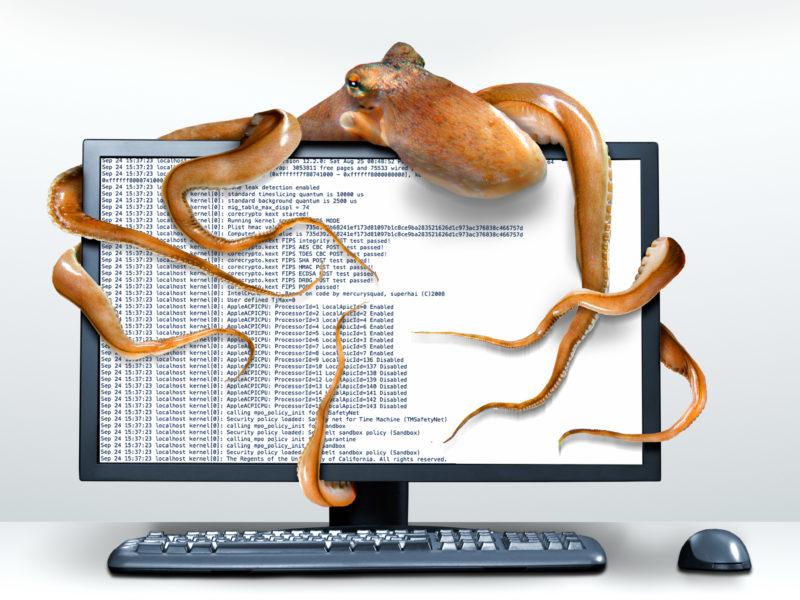 Fotomontage mit Photoshop: Symbolbild für Datenklau: Die Tentakel einer Datenkrake umschlingen einen Computermonitor.
