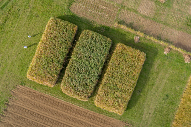Aerial and Drone photography: Field for scientific evaluation of the growth of high-yielding energy-supplying plants.