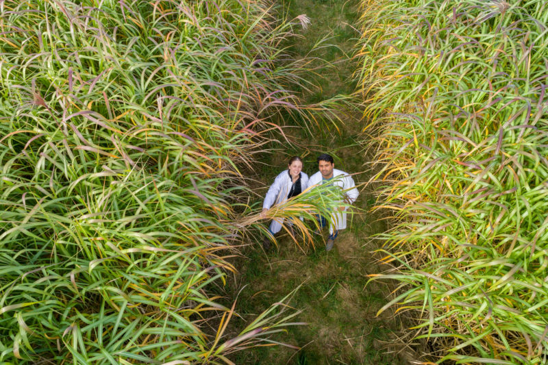 Aerial and Drone photography: Two scientists stand for Miscanthus cultivation in a field at the University of Hohenheim.