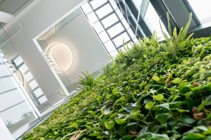 Architectural photography: In a company headquarters, a wall in the stairwell was planted with vertically rooted plants that covered all floors. View from below vertically upwards to the ceiling equipped with a modern round luminaire.
