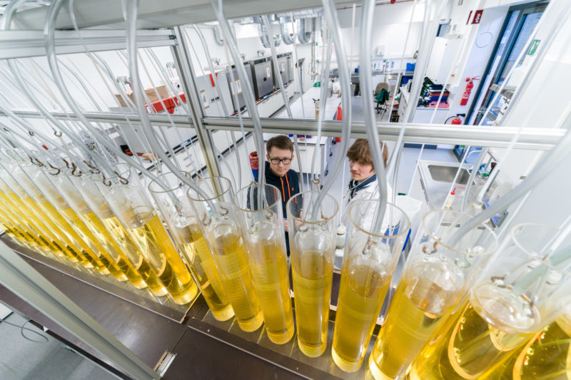 Science photography: Research into renewable raw materials is carried out in a laboratory of the Faculty of Agricultural Sciences, State Institute of Agricultural Engineering and Bioenergy, at the University of Hohenheim.