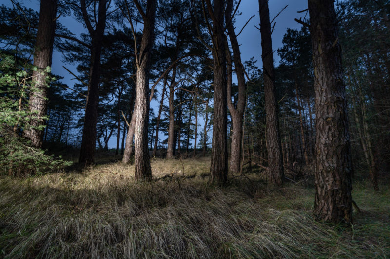 Landscape photography at the Baltic Sea coast: trees at a coastal strip in the northeast of Mecklenburg-Vorpommern near the city of Greifswald. The photo was taken at dusk and additional grazing light was used.