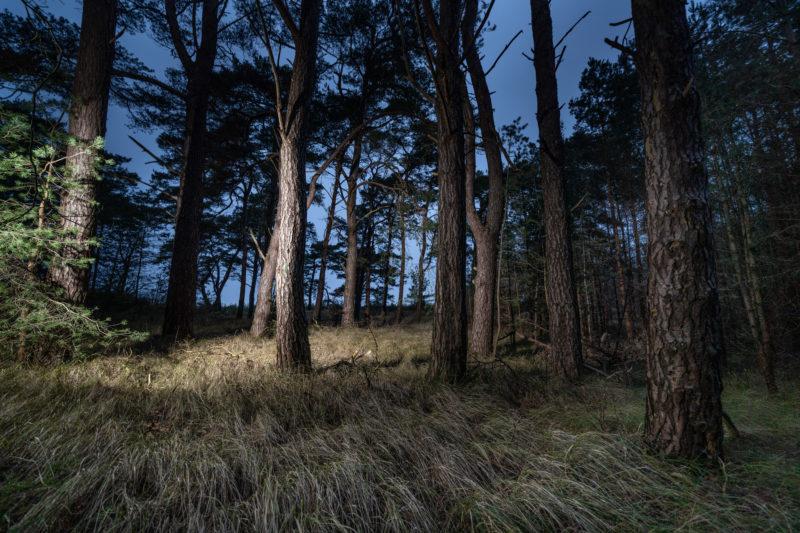 Landschaftsfotografie  an der Ostseeküste: Bäume an einem Küstenstreifen im Nordosten Mecklenburg-Vorpommerns nahe der Stadt Greifswald. Das Foto wurde in der Dämmerung fotografiert und zusätzliches Streiflicht wurde eingesetzt.