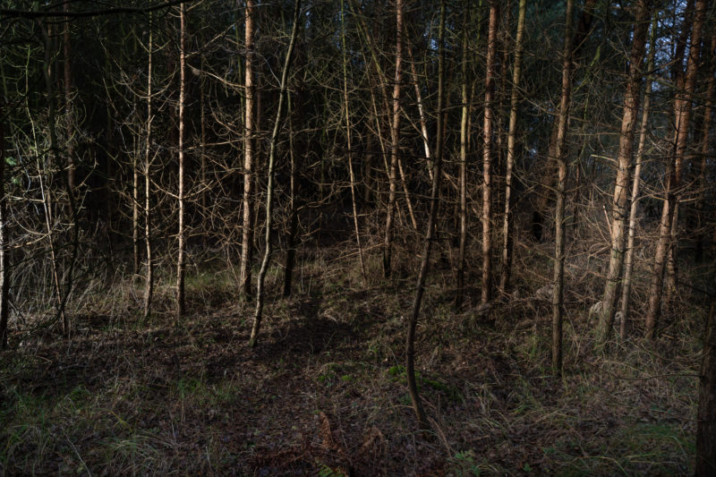 Landscape photography at the Baltic Sea coast: In the thicket of winter trees brown trunks and branches glow in the evening darkness.