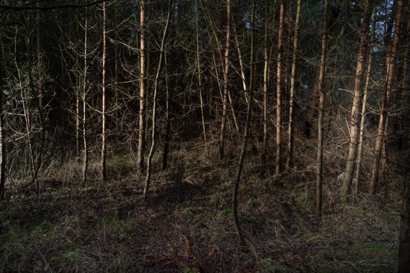 Landschaftsfotografie  an der Ostseeküste: Im Dickicht winterlicher Bäume leuchten braune Stämme und Zweige in der Abenddunkelheit.