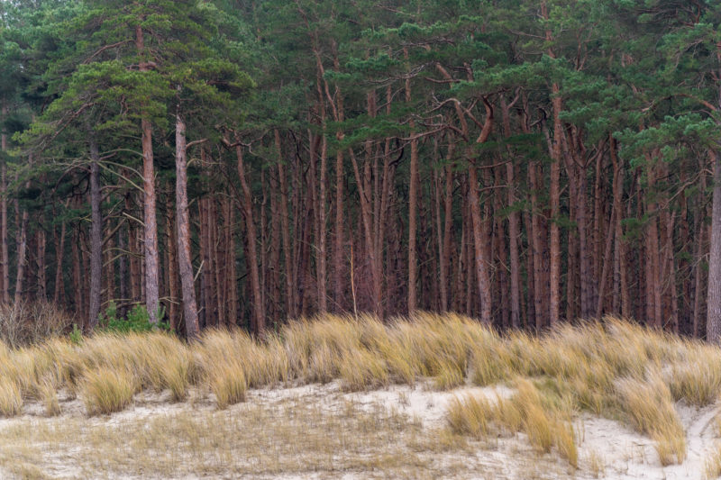 Landscape photography on the Baltic Sea coast: sand, dune grasses and the red trunks of the pine forest behind them form clearly defined zones.