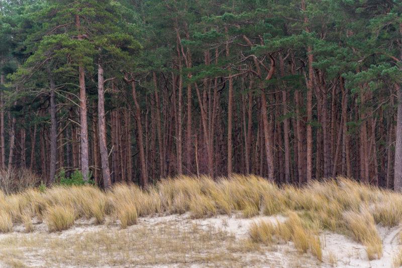 Landschaftsfotografie  an der Ostseeküste: Sand, Dünengräser und die roten Stämme des dahinterliegenden Pinienwaldes bilden klar abgegrenzte Zonen.