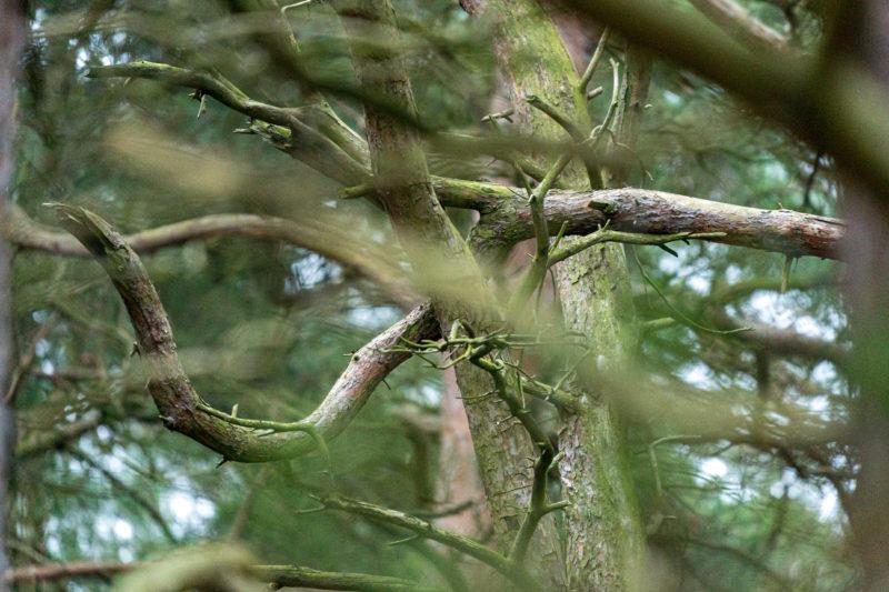 Landschaftsfotografie  an der Ostseeküste: Krumm gewachsene Zweige ergeben ein urwüchsig wirkendes Foto mit unscharfen Ästen im Vorder- und Hintergrund.
