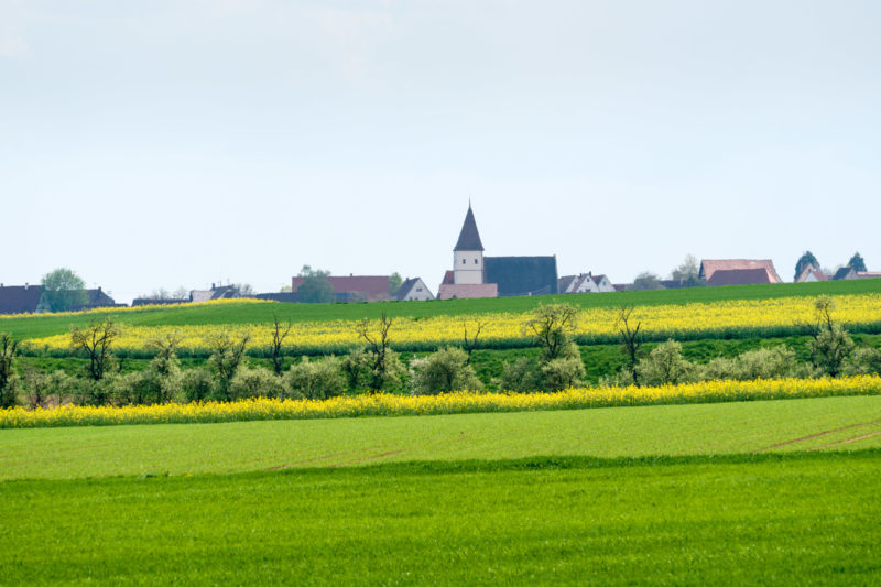 Landscape photogaphy: A southern German village at the edge of fields. Everything is green and the rape is in bloom yellow. The church tower in the background towers above the houses.