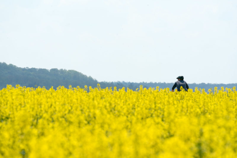 Landscape photogaphy: A cyclist in the agricultural nature. The rape field in the foreground is in yellow blossom. Behind it on the horizon a forest edge.