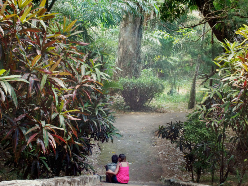 travel photography: Mauritius: A native pair of lovers in the Sir Seewoosagur Ramgoolam Botanical Garden in Pamplemousses.