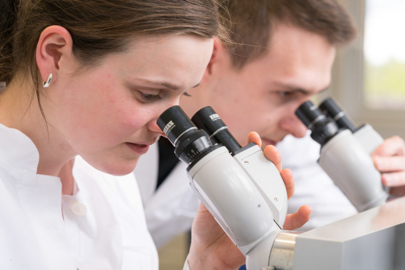 Science photography:  Students of the University of Hohenheim at the microscope.