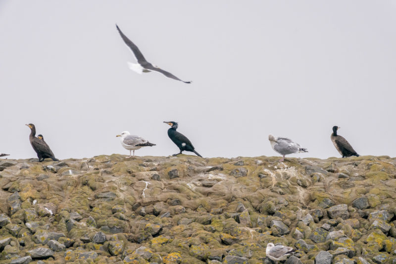 Nature photography: Birds at the Baltic Sea coast, Image 05 of 27