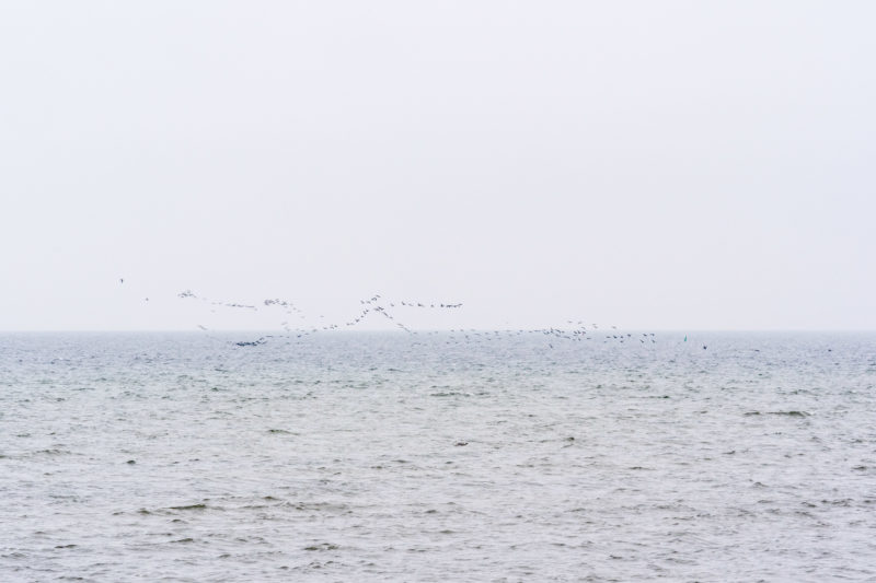 Nature photography: Birds at the Baltic Sea coast, Image 07 of 27