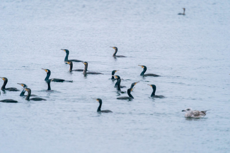 Nature photography: Birds at the Baltic Sea coast, Image 16 of 27