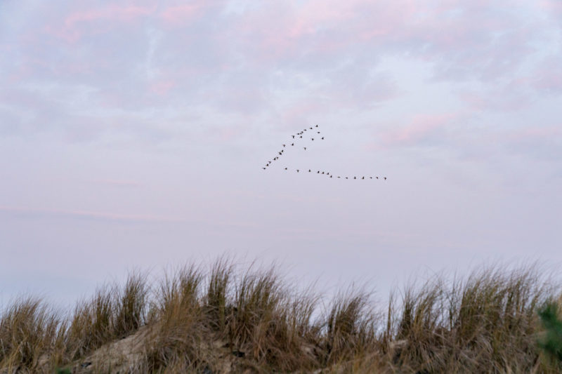 Nature photography: Birds at the Baltic Sea coast, Image 17 of 27