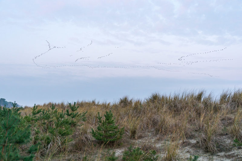 Nature photography: Birds at the Baltic Sea coast, Image 18 of 27