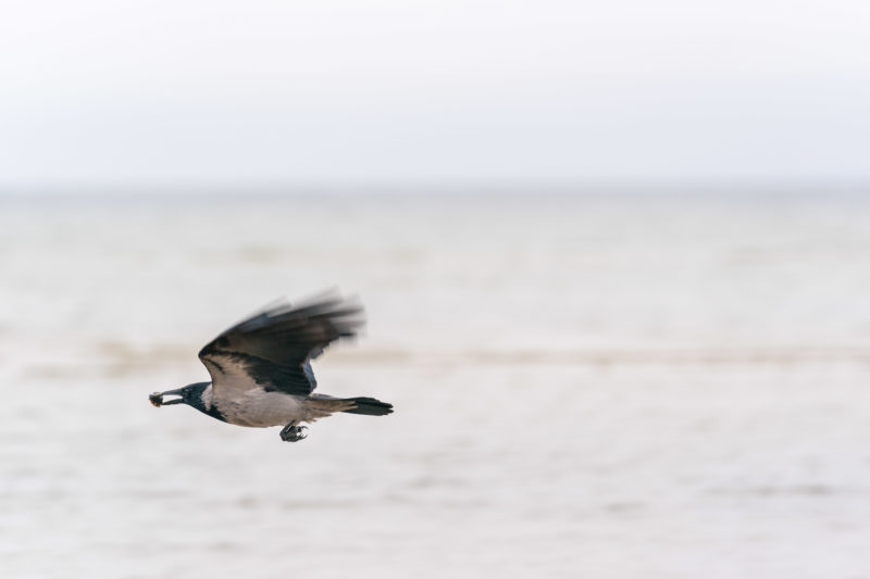 Nature photography: Birds at the Baltic Sea coast, Image 19 of 27