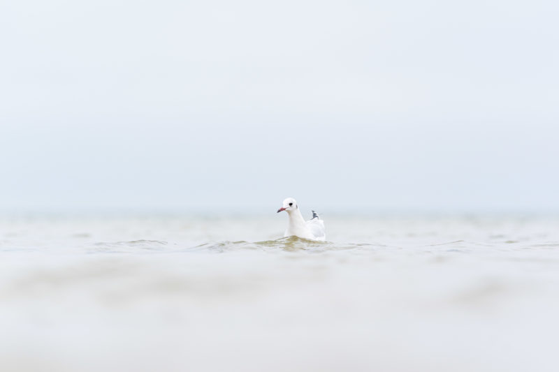 Nature photography: Birds at the Baltic Sea coast, Image 21 of 27