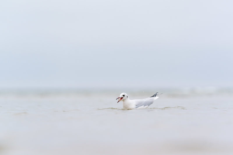 Nature photography: Birds at the Baltic Sea coast, Image 23 of 27