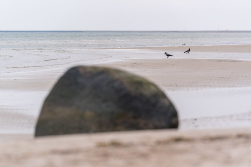Nature photography: Birds at the Baltic Sea coast, Image 24 of 27