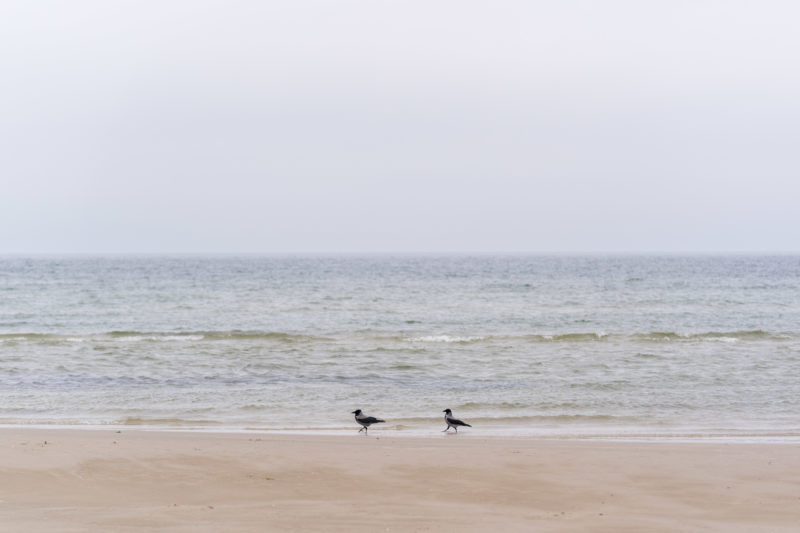 Nature photography: Birds at the Baltic Sea coast, Image 25 of 27