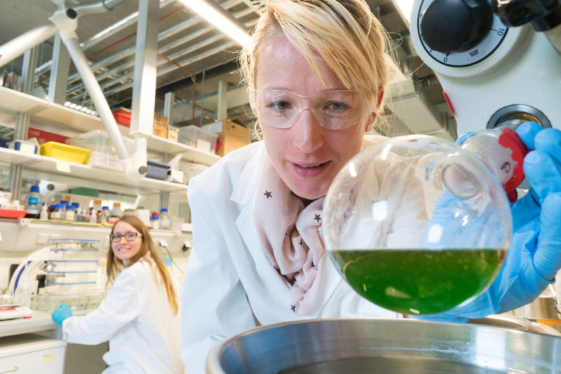 Science photography: A researcher at the University of Hohenheim with a green plant substance.