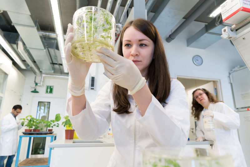 Science photography: The Institute of Phytomedicine at the University of Hohenheim is investigating new biological methods to prevent the use of chemical pesticides. A colleague is investigating a laboratory plant in its breeding tank.