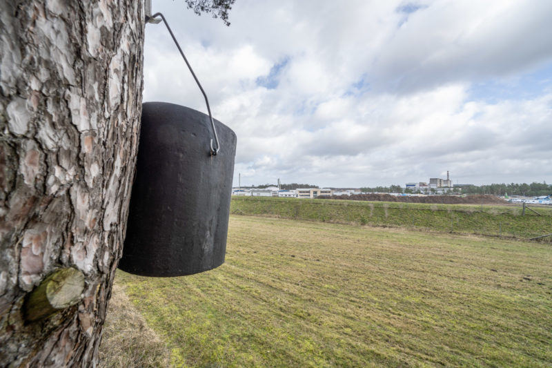 Photo reportage with bat specialists: A nesting box hanging from a tree in the foreground. Behind it an industrial plant.