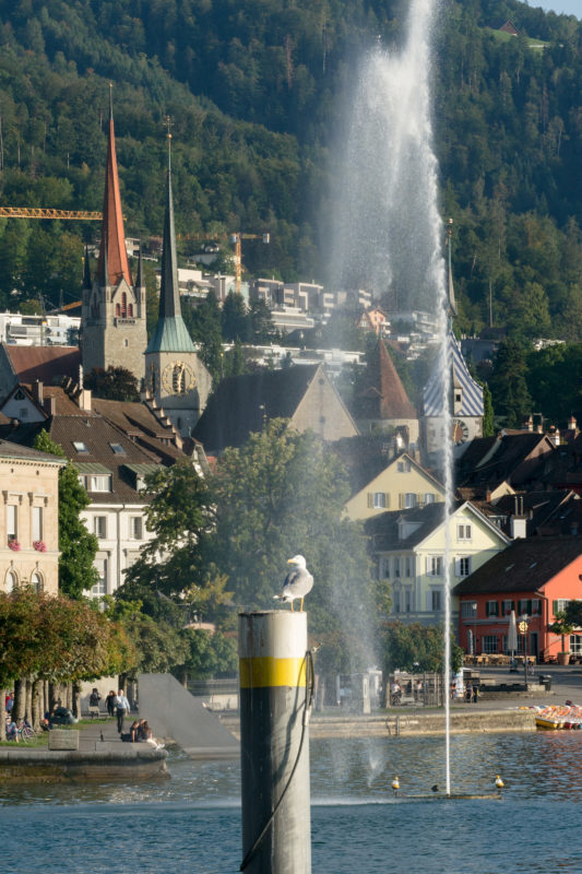 Portrait of the town: Train at Lake Zug. A seagull stands on a post in Lake Zug. In the background a water fountain and houses and a church of the town of Zug.