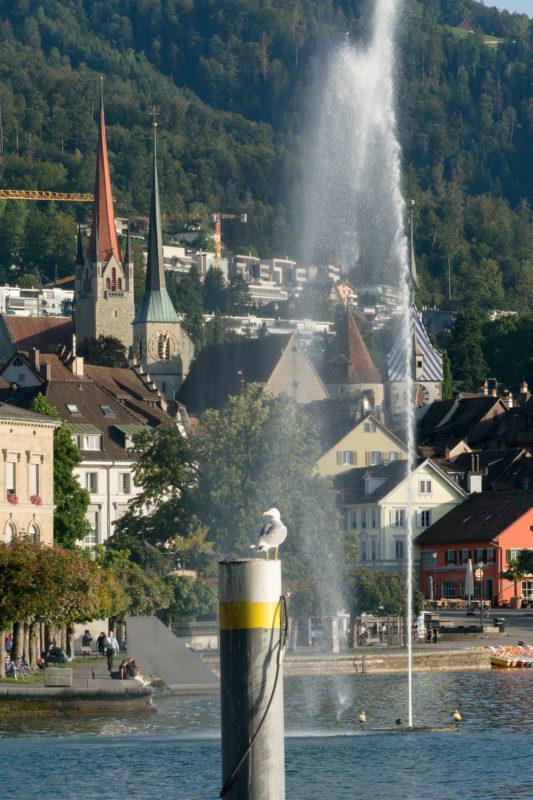Stadtportrait: Zug am Zuger See. Eine Möwe steht auf einem Pfosten im Zuger See. Im Hintergrund eine Wasserfontaine und Häuser und eine Kirche der Stadt Zug.