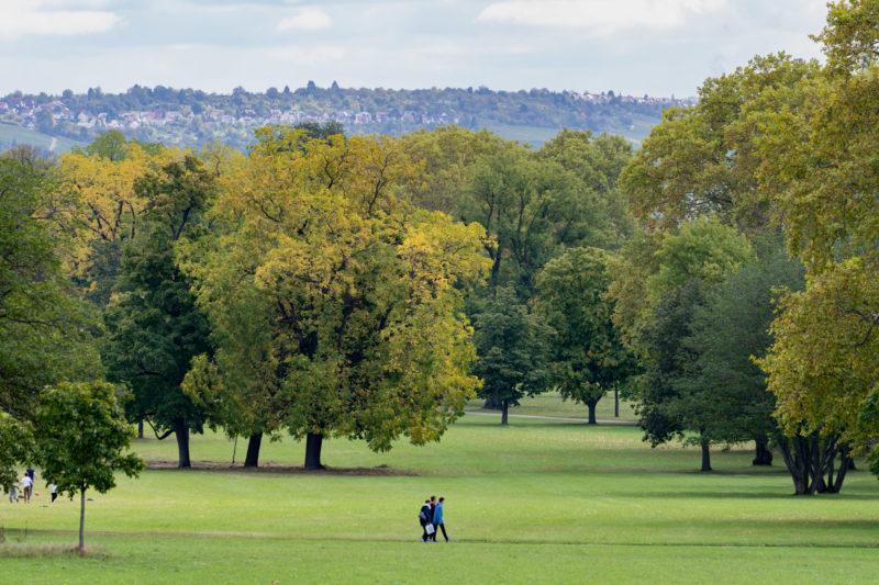 Stadtportrait Stuttgart: Spaziergänger im grünen Rosensteinpark mit seinen vielen alten Bäumen.