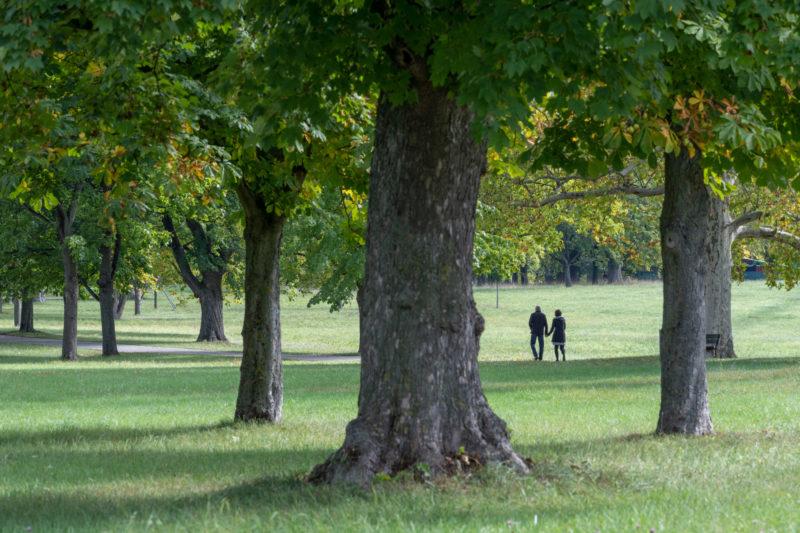 Stadtportrait Stuttgart: Spaziergänger zwischen den alten Bäumen im Rosensteinpark.