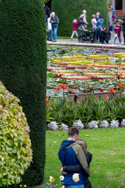 Portrait of Stuttgart: A couple in front of the water lily pond at Wilhelma.