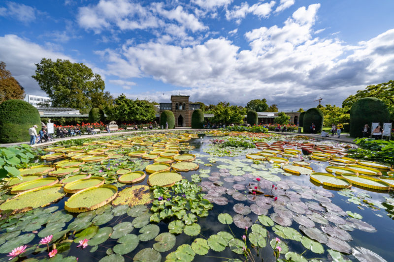 City portrait Stuttgart: The water lily pond in the botanical-zoological garden Wilhelma with the buildings in Mauritanian style and the many flower islands in the background. Above it the blue sky with a rising rain front.