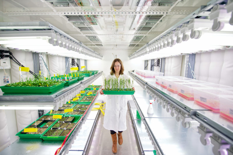 Science photography: A scientist at the Centre for Plant Molecular Biology ZMBP at the University of Tübingen in a growth chamber for plants. Here, plants are bred and examined under precisely defined conditions.