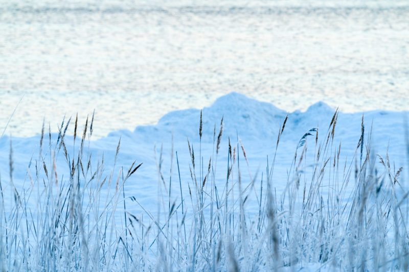Landscape photography: Winter in Finland: Frozen grasses on the shore. Behind it you can see snow and the waterline of the coast.