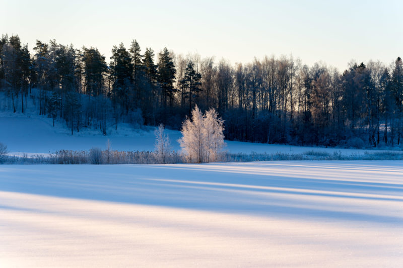 Landscape photography: Winter in Finland: Trees on the snow-covered frozen shore of the Baltic Sea.