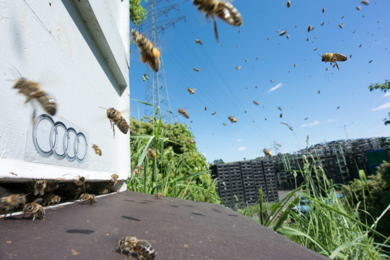 Even if they do not realize that they are flying to their company, bees may find their hive more easily.