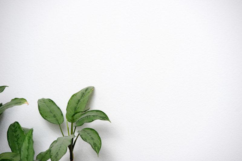 Aus weißen Wänden könnte Phantasie wachsen, wenn man seine Zeit zwischen ihnen gerne absolviert. Ob das oft vorkommt, bleibt für mich als fotografierender Kurzbesucher in solchen Büros natürlich eher verborgen.