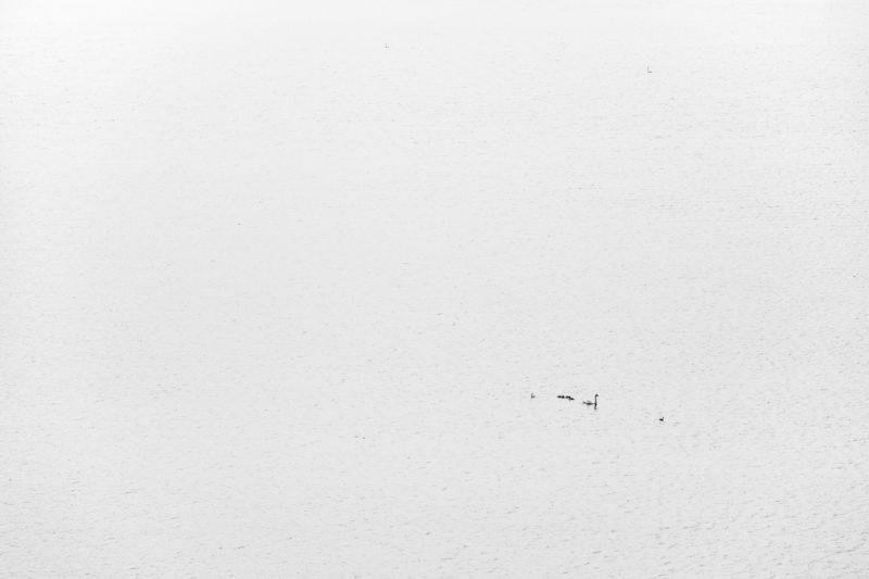 Die Interpretation als Freiheit oder Einsamkeit fällt dank der Protagonisten eindeutig aus. Eine solche Schwanenfamilie erscheint glücklich, egal wie weit das nächste Ufer entfernt ist. Wären es menschliche Schwimmer fühlte mancher vielleicht Unbehagen.